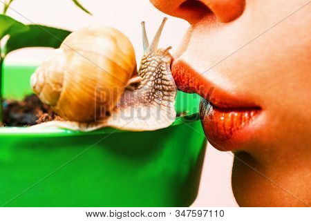 Skincare Repairing. Healing Mucus. Having Fun With Adorable Snail. Spa And Wellness. Cosmetics And S