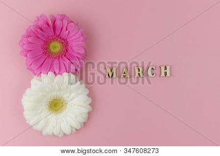 Two Big Gerbera Flowers, White And A Pink One With A Wooden Word March On A Pink Background Close Up