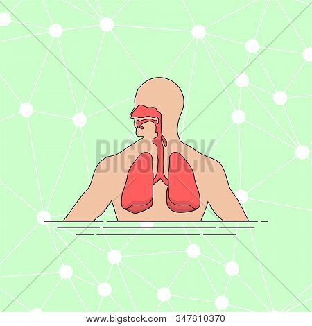 Anatomy Of The Human Respiratory Tract Vector Illustration For Template Design