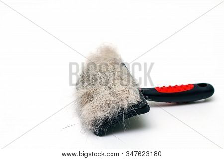 Slicker Brush With Animal Wool On White Background. Close-up, Selective Focus.