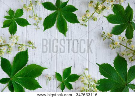 Green Chestnut Leaves, Chestnuts And Flowers On A Light Wooden Background. Frame For Text. Banner De