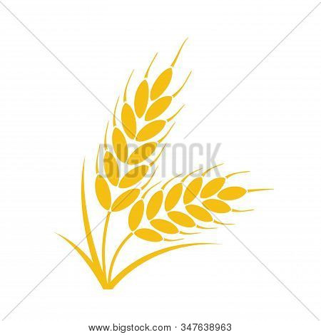 Vector Bunch Of Wheat Or Rye Ears With Whole Grain And Leaves, Yellow Crop Harvest Symbol Or Icon Is