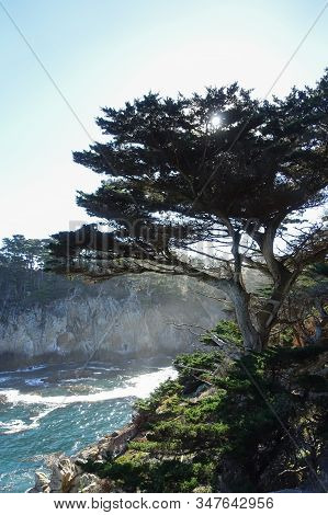 Vertical Image Of A Tree Perched On The Edge Of A Cliff With The Waves Of The Pacific Ocean In The B