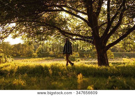 Side View Of Unrecognizable Male Trekker Walking Next To Tree With Sprawling Branches On Green Meado