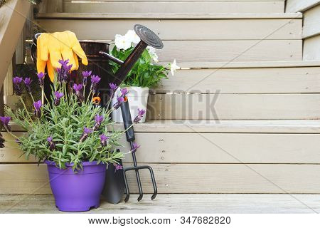 Blossoming Violas And Lavender With Gardening Tools At The Backyard Stairs. Child Family Gardening C