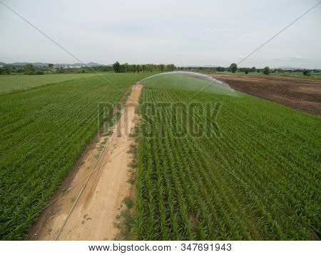 Aerial Of Corn Field With Overhead Irrigation