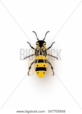 Honeybee, Tiny Insect Flat Vector Illustration. Flying Black And Yellow Bug Closeup Top View. Small