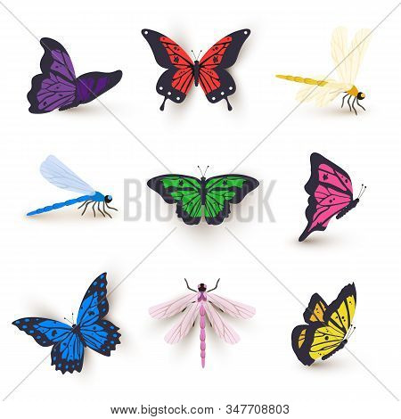 Dragonflies And Butterflies Illustrations Set. Insects With Bright Color Wings Vector Clipart. Isola