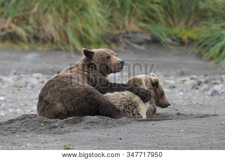 An unforgettable experience - A Grizzly mother with her cup, connected by deep affection