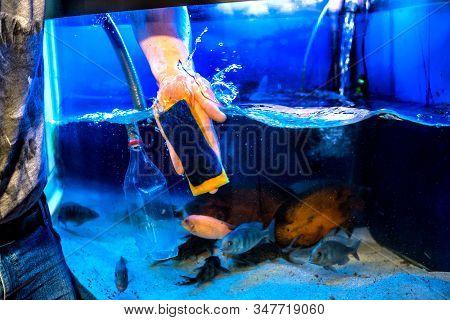 Aquarist And Aquarium сare. Home Aquarium Cleaning Process.