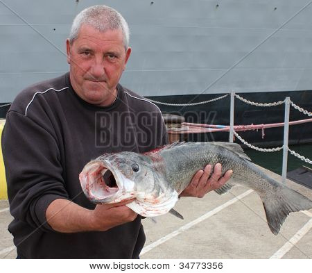 Large rod caught Seabass