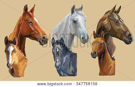 Set Of Colorful Vector Realistic Portraits Of Mares And Foals Looking In Profile. Group Of Horses Is