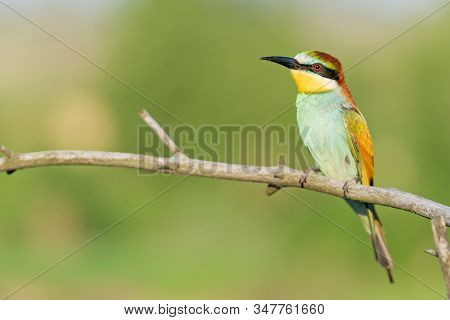 Beautiful Wild Bird Sits On A Dry Branch