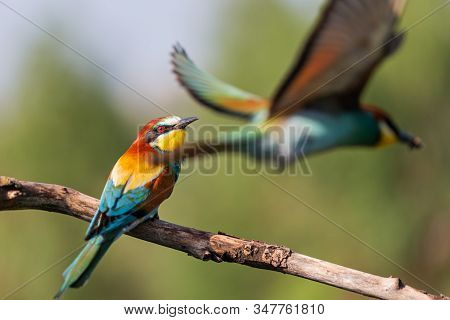 Beautiful Wild Birds Scurry Around In Spring