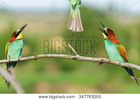 Two Birds Look Up At The Tail Of The Third Bird