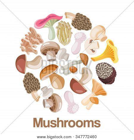 Mushrooms Edible Vegeterian Mushrooming Poster Vector Illustration Circle Composition. Cartoon Champ