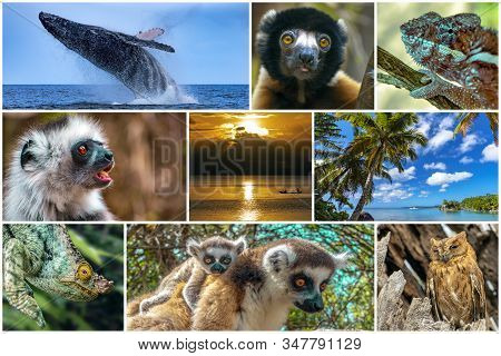 Nature,scenery,wildlife Animals Of Madagascar  - Collage Set