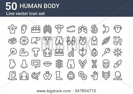 Set Of 50 Human Body Icons. Outline Thin Line Icons Such As Larynx, Hair, Pregnant, Spleen, Eye, Ear