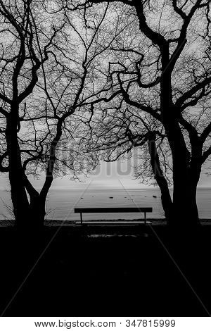 Bench By Ocean With Trees In Black And White.