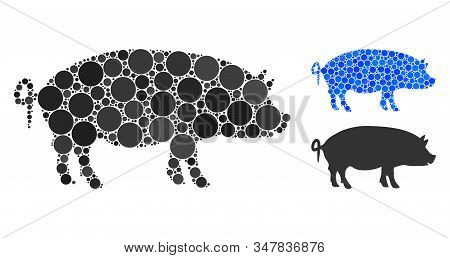 Swine Composition Of Filled Circles In Variable Sizes And Color Hues, Based On Swine Icon. Vector Fi