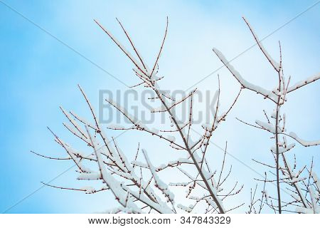 A Low Angle View On The Fragile Branches Of A Young Tree, Covered In Snow During A Cold Winter, Agai