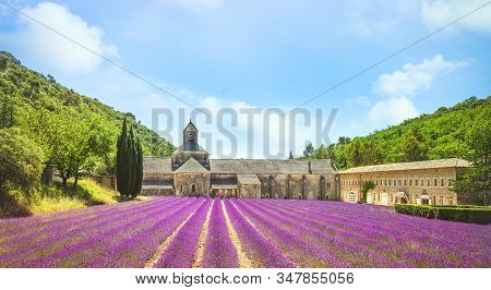 Abbey Of Senanque And Field Of Lavender Flowers In Blossom. Gordes, Luberon, Vaucluse, Provence, Fra