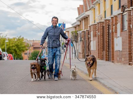Professional Dog Walker Or Pet Sitter Walking A Pack Of Cute Different Breed And Rescue Dogs On Leas