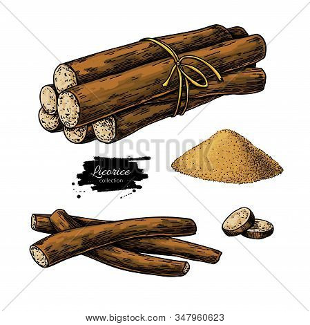 Licorice Root Bunch. Vector Drawing. Botanical Illustration. Herbal Sketch.
