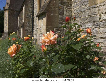 Peach Roses By Church