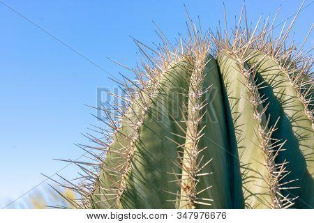 Closeup Detalis Of Southwestern Desert Cactus With Sharp Spines Framed Against A Blue Sky