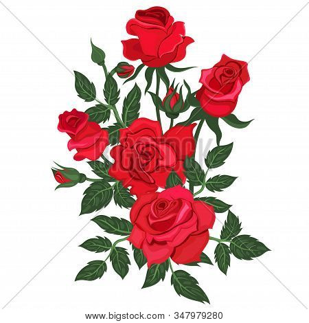 Bunch Of Red Roses Isolated On A White Background. Vector Image.