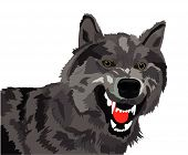 The image of the growling wolf on a white background poster