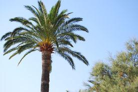 Palm Tree In A Blue Sky