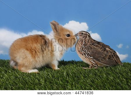 Bunny rabbit and quail are friends