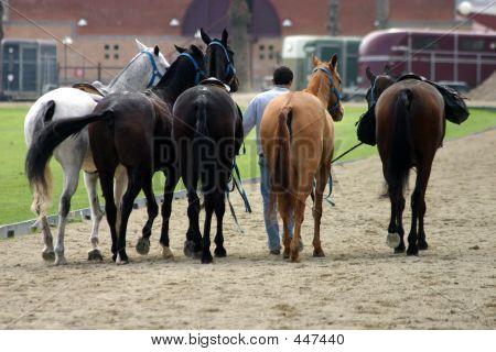 Equestrian Trainer