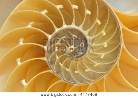 Nautilus Shell Detail