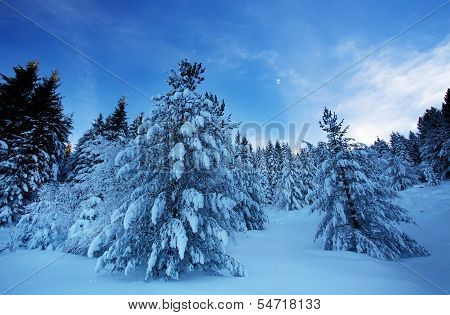 Morning In Bulgarian Winter Forest