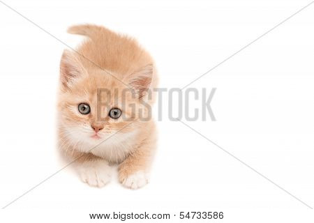 Funny kitten looking up