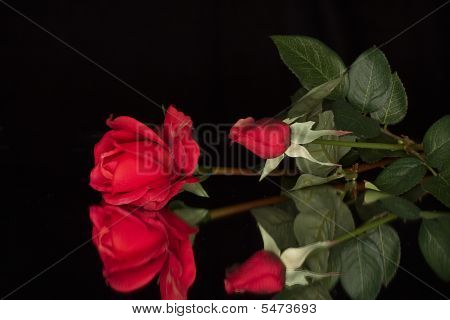Red Roses And Reflections