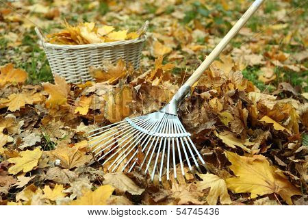 Cleaning of autumn leaves on a green lawn