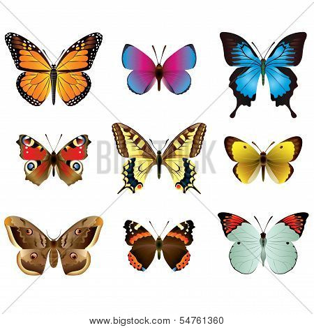 Butterflies Photo-realistic Vector Set