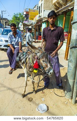 Donkey With Cart For Hire