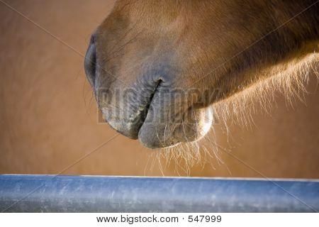 Horse Grin