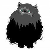 nice persian cat on white vector illustration poster