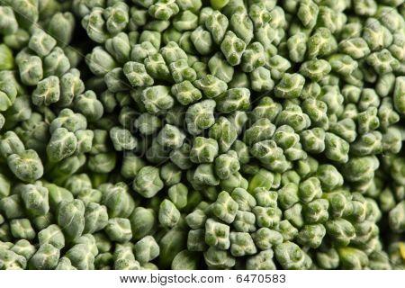 Broccoli, Close-up
