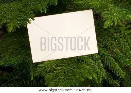 Card And Branches
