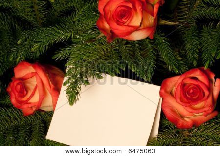 Evergreen Roses And Card