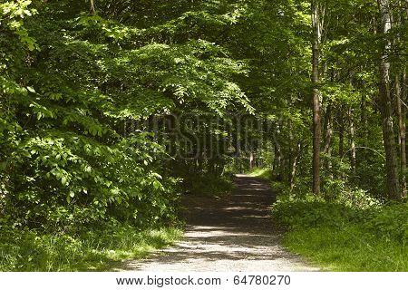 Broadleaf Forest - Forest Path