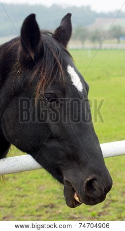 A brown horse smiling