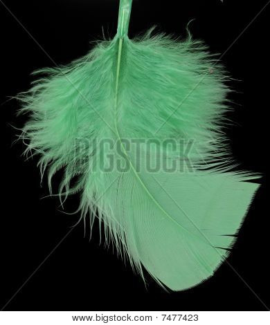 feather of the bird green on black background poster